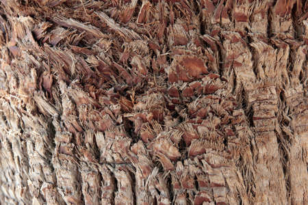 fragment of the upper skin texture palm bark photo