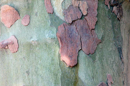 colorful bark flakes on a flat tree trunk photo