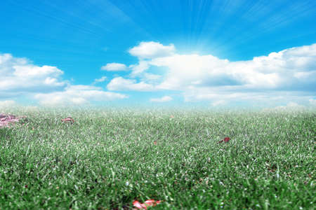 brightly lit: brightly lit by sunlight beautiful meadow