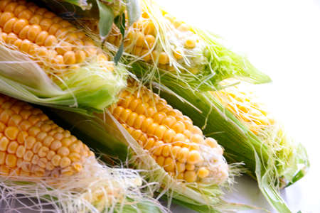 countryside loving: beautiful ripe grain corn on the leaves