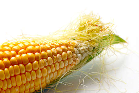 beautiful ear of ripe corn as a food item Stock Photo