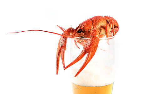 crawfish boiled and light beer in a glass Stock Photo
