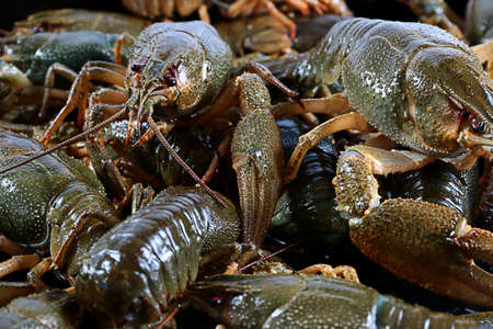 fished: large living cancer fresh fished from the pond Stock Photo