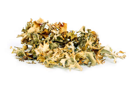 smokies: Freshly dried and Icelandic moss as a plant used in medicine