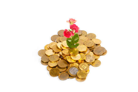 beautiful green sprout and flower on a pile of Russian metal coins of gold color Stock Photo