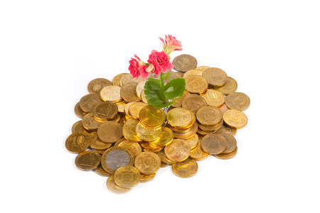 forestation: beautiful green sprout and flower on a pile of Russian metal coins of gold color Stock Photo