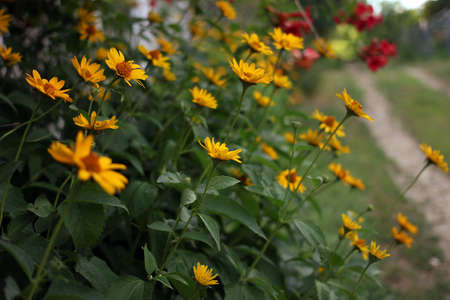 yellow flowers perfect complement to the green garden lawn decorations