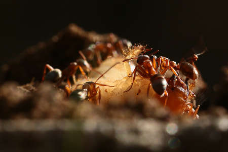 Several red ants and a beetle larva in the surrounding wildlife