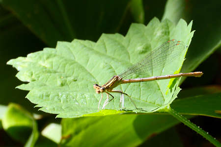 A small graceful dragonfly and beautiful green plant leaves Stock Photo