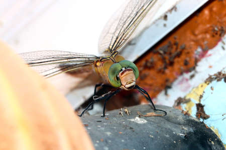 beautiful wild carnivorous dragonfly on a stone wall