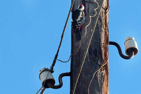 beautiful forest bird on a light column Stock Photo