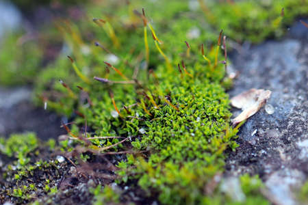young fresh moss and lichen on the surface of the granite platform Stock Photo