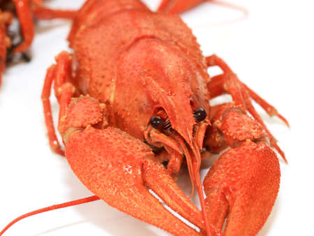 boiled crayfish as an element food and snack Imagens