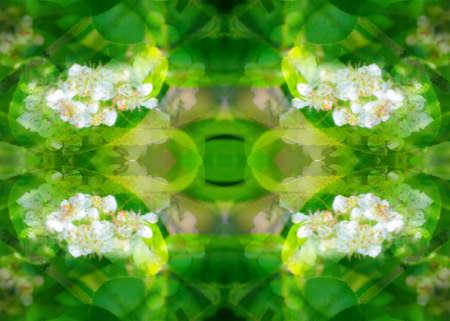 wildlife with mirrors kaleidoscope