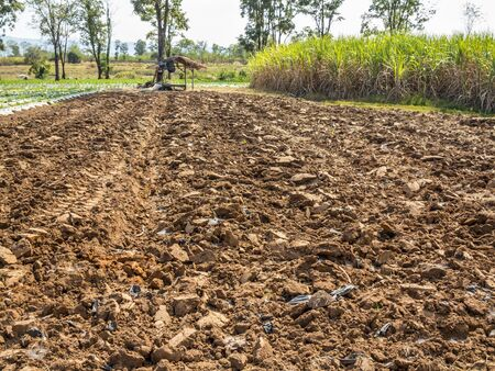 tillage: Tillage cultivation for crop plant in winter.