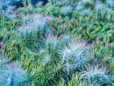 beatiful: This is a beatiful grass texture.