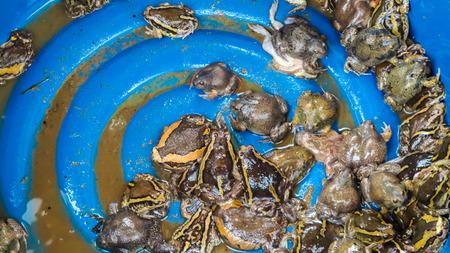 bullfrog: Bullfrog selling.