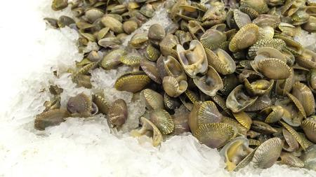 clams: Clams seashells on ice.
