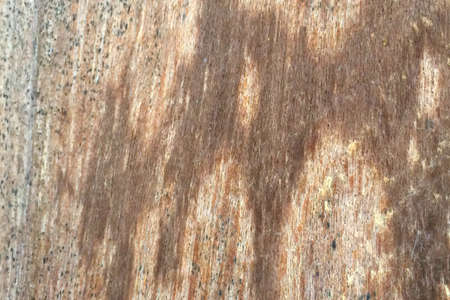 wood backgrounds: Old wood backgrounds texture Stock Photo