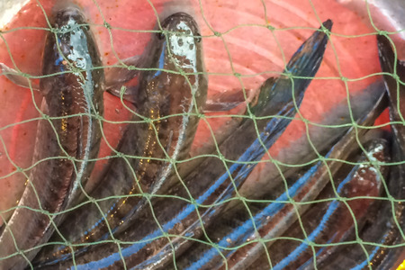 giant snakehead: Fresh fish sell at  the market.