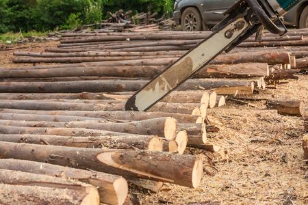 wood cut: Chainsaw to cut a eucalyptus wood.
