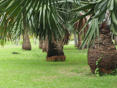 Palm trees in tropical Park