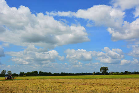 cropland: Lush green rice field with a blue sky and clouds