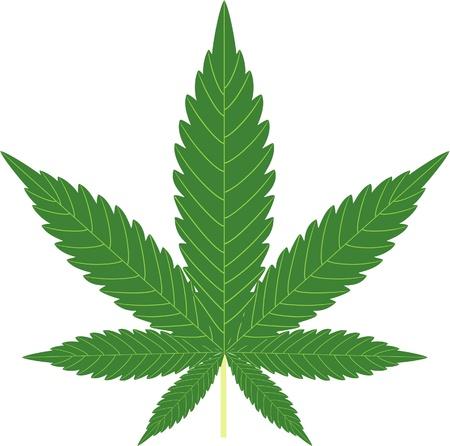 marihuana: cannabis geïsoleerd op wit Stock Illustratie