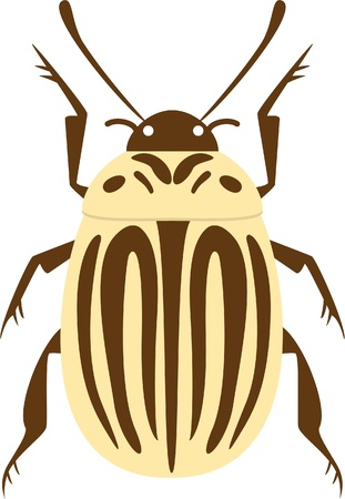 weevil: potato beetle isolated on white Illustration