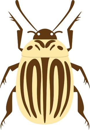 potato beetle isolated on white Illustration