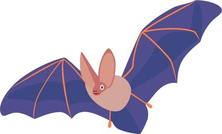 flying bat isolated on white