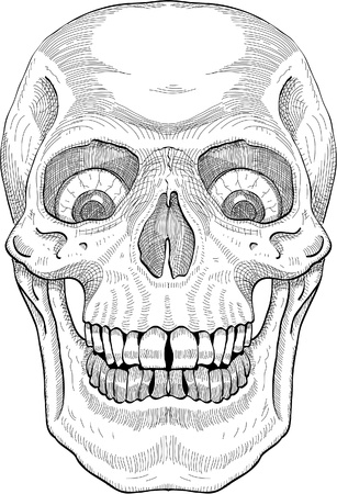 The human skull draw in engrave style Vector