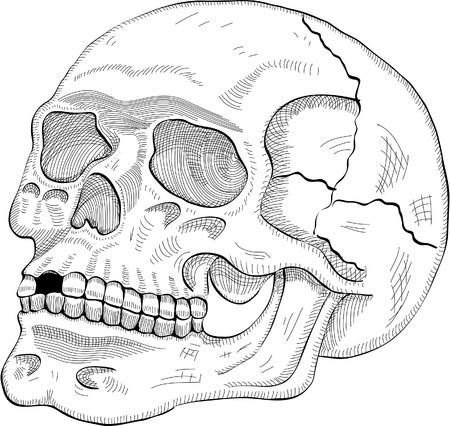19th: The human skull in engrave style
