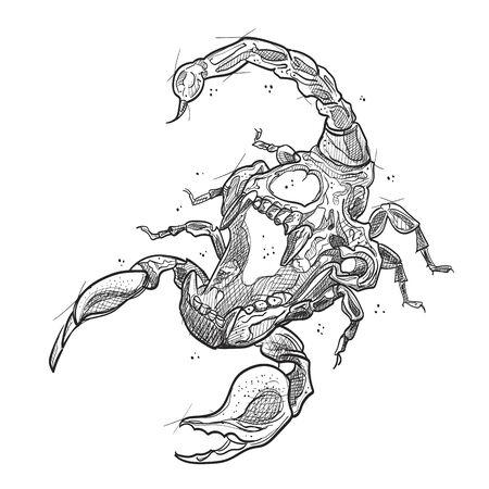 Skull scorpion illustration in sketch style Vektoros illusztráció