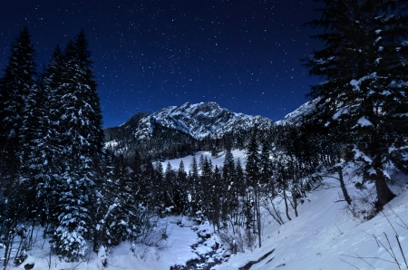 austrian: Winter Landscape in Starry Night