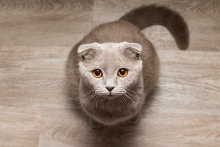 Gray cat look at me