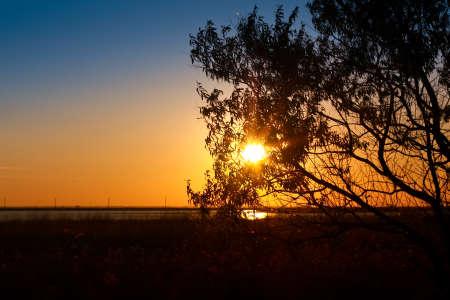 Sunlight through the twigs Stock Photo