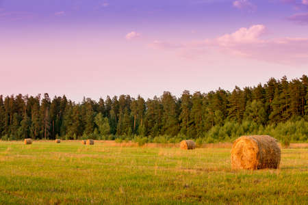 Straw bales in the autumn field