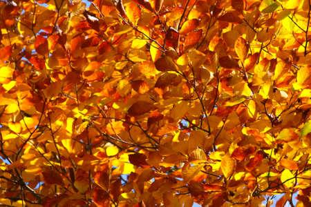 Colors of fall - leaf frame