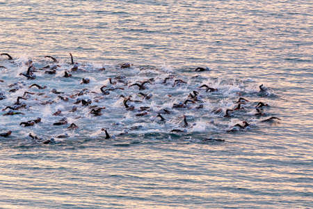Triathletes swim on start of the Ironman triathlon competition