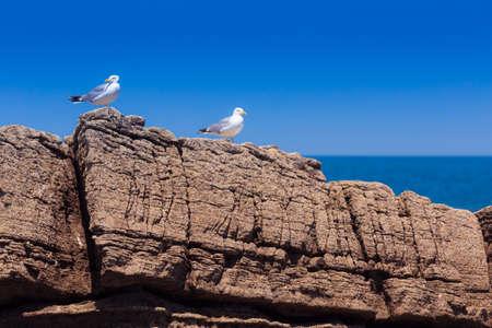 two white seagulls on rocky beach Stock Photo