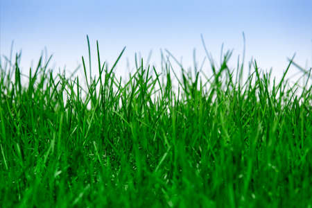 Green grass isolated on blue background