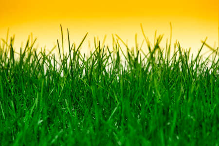 Green grass isolated on orange background Stock Photo