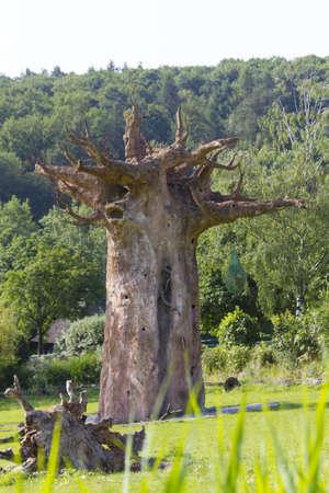 Giant Tree Фото со стока