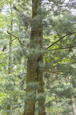 idylle: Tree