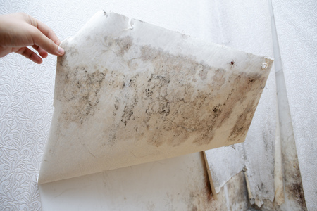 girl found mold in the corner of your bathroom , in your residential building after renovation Stock Photo