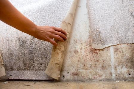 Mädchen hat Schimmel in der Ecke deines Badezimmers gefunden, in deinem Wohnhaus nach der Renovierung