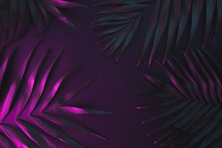 Tropical and palm leaves in vibrant bold gradient holographic neon colors Stock Photo - 119193303