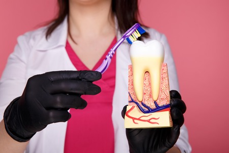 Woman dentist with gloves showing on a jaw model how to clean the teeth with tooth brush properly and
