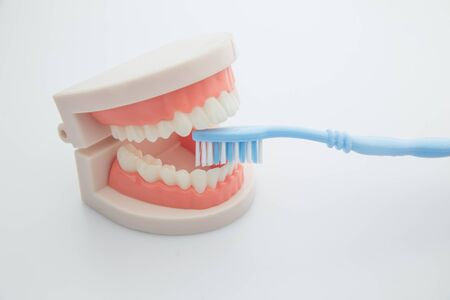 Dentistry, medicine, medical equipment and stomatology concept. Orthodontic model and dentist tool - teeth model with ceramic braces on an artificial jaws closeup. Jaw model with blue toothbrush on white background